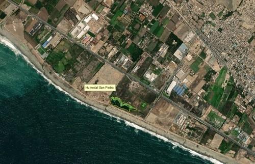 Municipalidad de Lima se pronuncia sobre Humedal San Pedro de Lurín