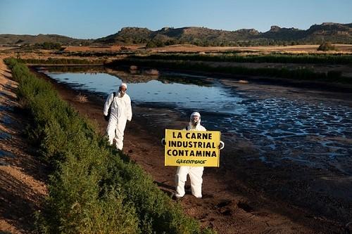 Activistas de Greenpeace entran en la macrogranja de porcino más contaminante de España
