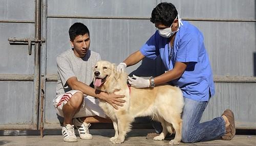 Regiones del sur del país vacunarán a sus canes contra la rabia este mes