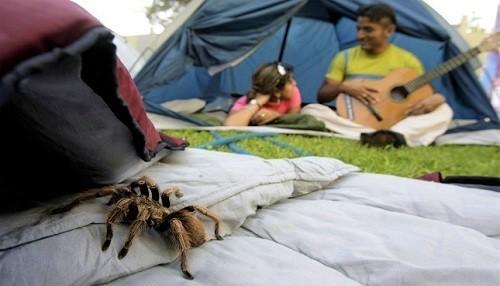 Minsa recomienda no acampar cerca de cuevas o formaciones rocosas para evitar ataques de animales silvestres