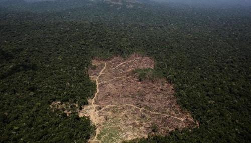 Brasil: la deforestación amazónica aumenta rápidamente