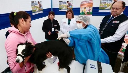 Minsa vacunará a más de un millón de canes en cinco regiones del país