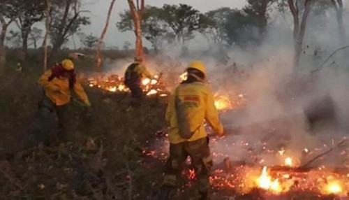 Bolivia y Brasil combaten intensos incendios forestales que hasta ahora han quemado 500,000 hectáreas
