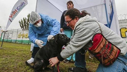 ¿Ya sabe dónde puede vacunar a su can contra la rabia, este fin de semana?