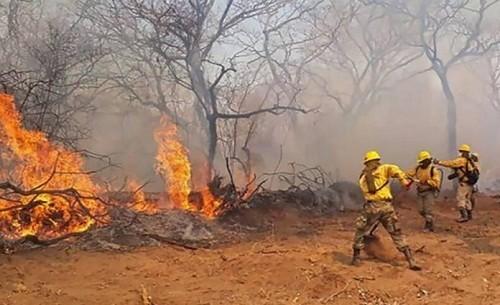 Amazonas: Bolivia ha perdido 1,7 millones de hectáreas por incendios forestales