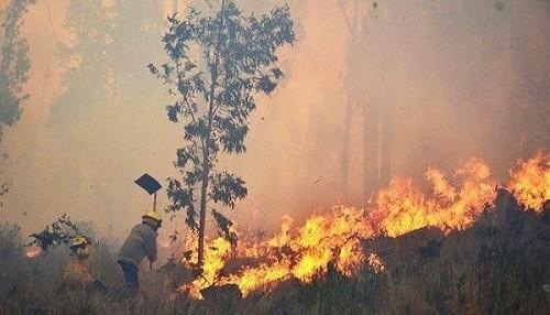 Los incendios forestales en Bolivia han consumido dos millones de hectáreas desde agosto