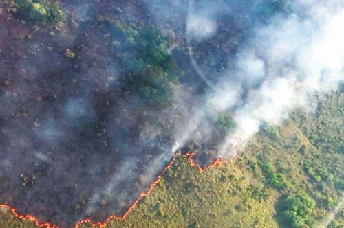 Pandillas criminales están detrás de la destrucción de la Amazonía brasileña