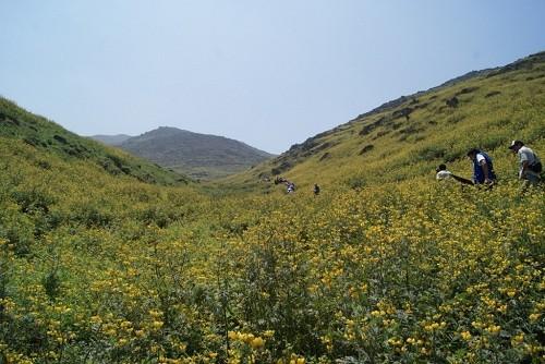 Municipalidad de Lima presentó propuesta para proteger Lomas