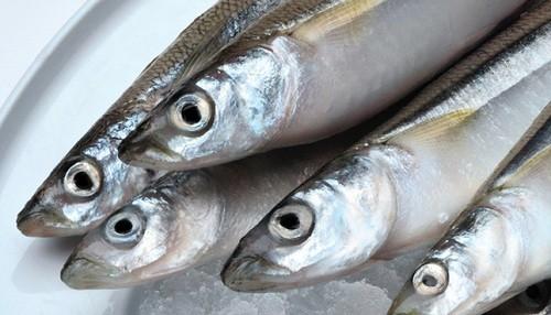 PRODUCE: A partir del lunes 28 de octubre se reiniciará pesca del recurso pejerrey en el país