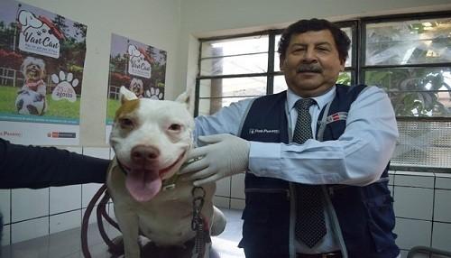 Minsa invoca a la población a denunciar contra dueños de canes peligrosos que ataquen a víctimas