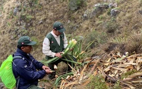 Establecerán protocolos de monitoreo de oso andino en 9 áreas naturales protegidas del centro y sur del Perú