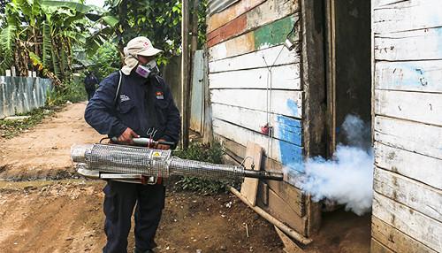 Madre de Dios: Minsa y Diresa han fumigado más de once mil viviendas para eliminar el zancudo del dengue