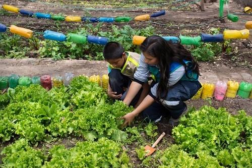 Nuevos biohuertos en 18 colegios del Cercado de Lima
