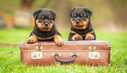 5 destinos naturales para disfrutar con tu mascota en Perú