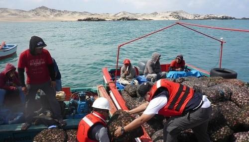 Se decomisó más de 30 toneladas de concha de abanico de procedencia ilegal