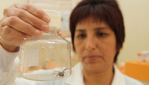 Minsa: Mordeduras de arañas y serpientes venenosas pueden ocasionar la muerte