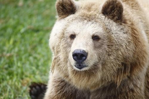 Celebran Día Mundial para la Protección de Los Osos en El Parque De Las Leyendas