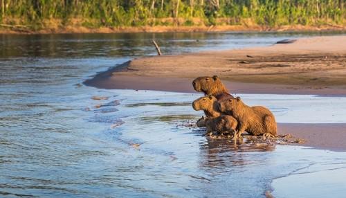 Naturaleza y conservación: el turismo que conecta con el entorno