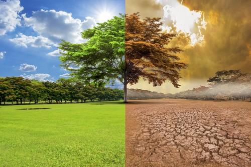 Encuesta sobre el cambio climático a nivel mundial: 64 por ciento dice que estamos en situación de emergencia climática