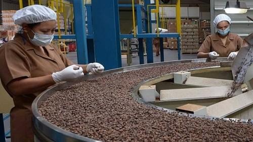 Café orgánico: Productores peruanos organizados exportaron más de 67 mil toneladas durante el 2020 por un valor que supera los U$$ 215