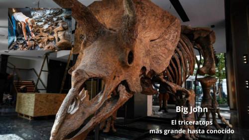 'Big John', el triceratops más grande conocido, a punto de ser subastado en París