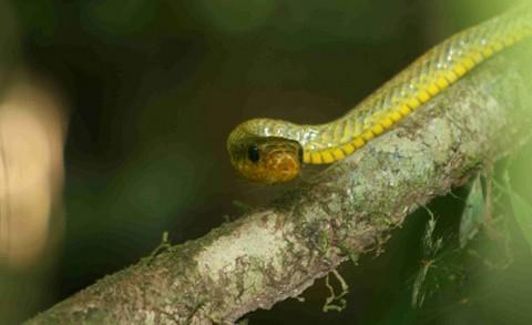 Encuentran nuevas especies en los andes tropicales peruanos