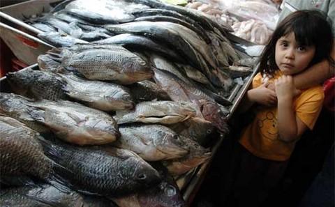 Estudio revela que comer pescado nos haría más inteligentes