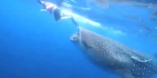 Video: Periodista casi muere devorado por tiburón