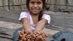 Decretan el 1 de octubre como el día del cacao en el Perú