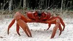 Cangrejos invadirían la Antártida, producto del calentamiento global