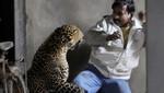 Siguen los ataques de leopardos en la India