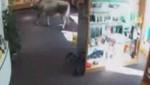 Vaca busca rebajas en tienda de Austria