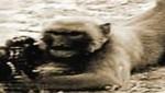 Mono casi mata a soldados con ametralladora (VIDEO)