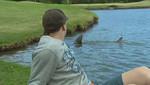 Australia: Tiburones invadieron campo de golf