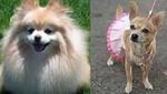 Dos perros se casarán en Nueva York para promover la adopción de animales