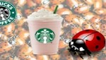 Cadena Starbucks usaba extracto de escarabajo en sus productos