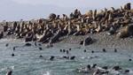 Reserva Nacional de Paracas recibió la visita de 83 mil turistas entre enero y abril