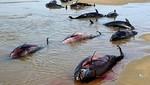 Virus que mató a especies marinas al norte del país, podría afectar a los humanos