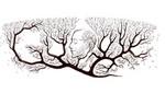 Google homenajea a galeno Ramón y Cajal con nuevo doodle