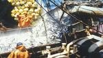 Suspenden extracción de anchoveta por 15 días en la costa norte - centro