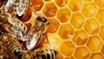 La jalea real: Otro precioso regalo de las abejas