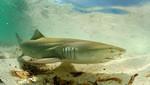 Venezuela Prohíbe Corte de Aletas de Tiburón y Crea Área Protegida