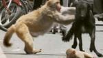 Monos casi asesinan a un hombre ebrio (Video)