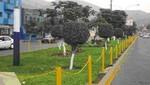 Siembran 20 mil plantones en el Rímac en campaña de arborización