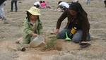 Voluntarios del Comando Ecológico reforestaron mil plantones de tara en la Reserva Nacional de Lachay