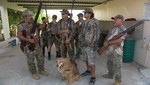[Puerto Rico] Disparan a la gargola en caceria reciente en Lajas: Ataca y mata animales de corral en fincas de la isla
