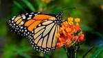 El Consejo de Promoción Turística de México y la Embajada de México auspician el estreno mundial de la película El vuelo de la monarca en 3D