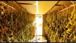 Hallan la fábrica de marihuana más equipada del mundo [VIDEO]