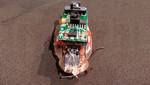 ¿Crean una cucaracha cibernética controlada por Twitter? [VIDEO]