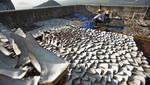 Cerca de 18.000 aletas de tiburón fueron fotografiadas en un tejado de Hong Kong [FOTOS]